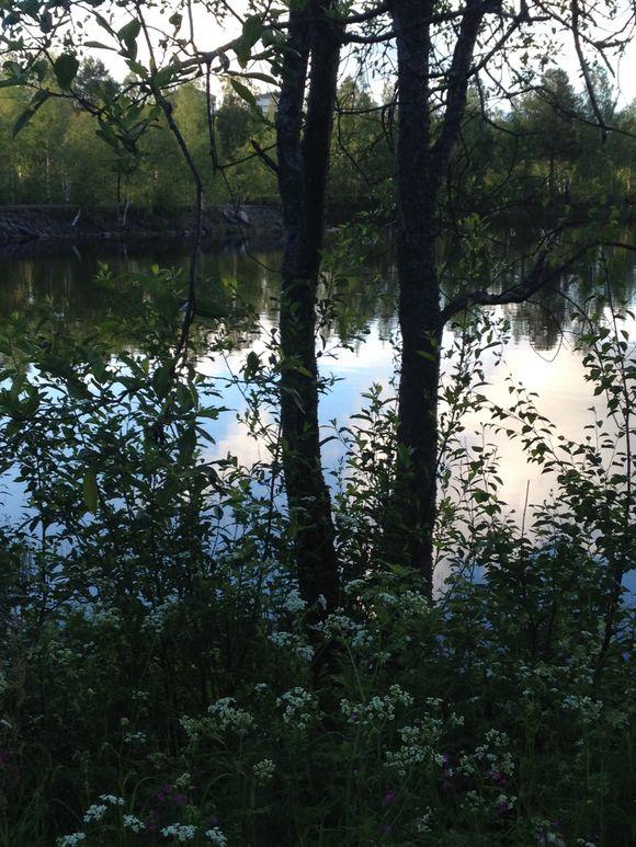 Naturbild