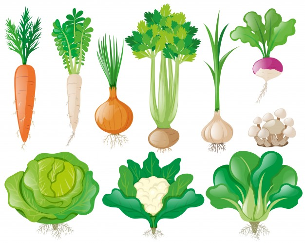 Different-types-of-vegetables_1308-3032